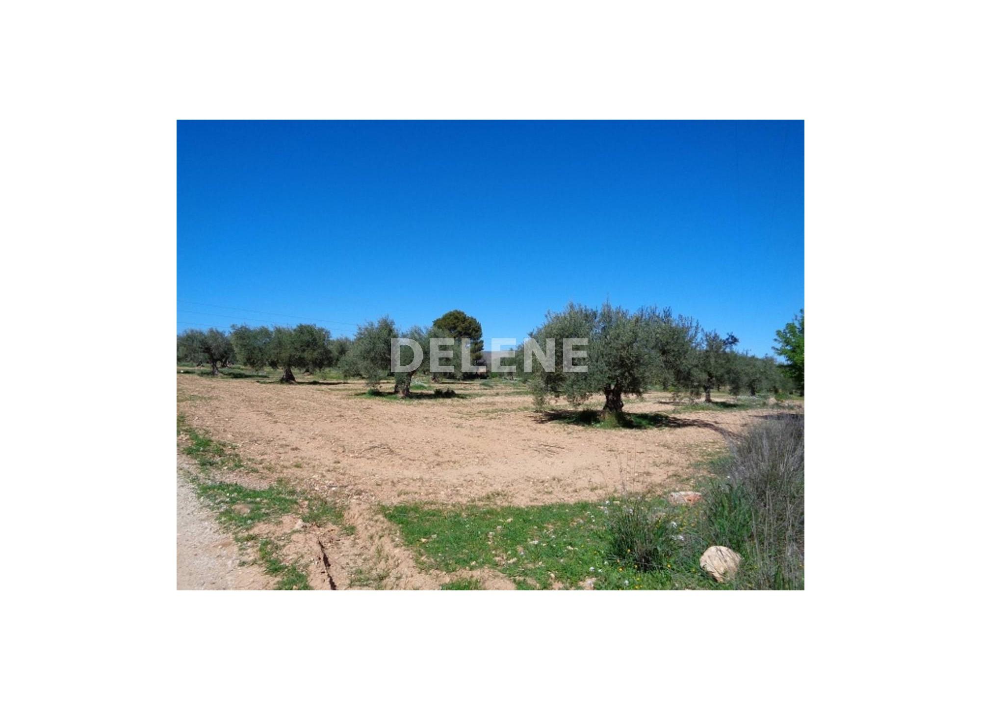 764 FINCA, ZONA SALIDA ALBACETE